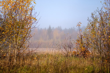 lonely autumn trees hiding in mist