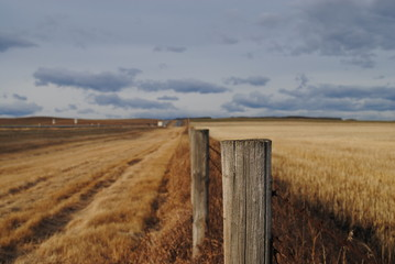 Fields and Fences in Alberta, Canada