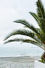 View of the sea and the yacht, through the branches of a palm tree. The concept of vacation and relaxation.