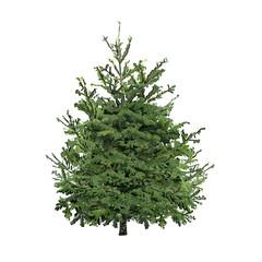 Fir-tree with green needles