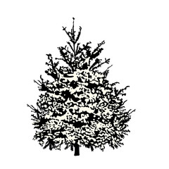 Fir-tree silhouette under snow