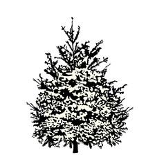 Fir-tree silhouette under snow