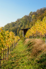 house in a vineyard in autumn with forest in background