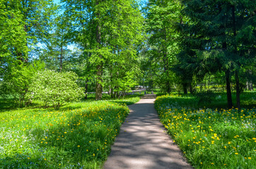 Russia. Pushkin. Catherine park.  Alley near The upper ponds