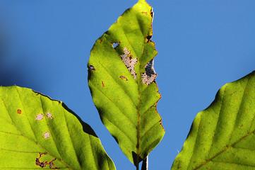 grünes Laubblatt im Herbst