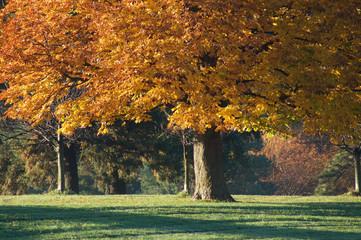 Trees Fall Autumn