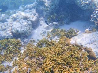 水中写真 モルディブ