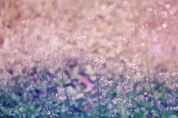 colorful  grass flower  soft focus spring ,autum nature  wallpaper   background
