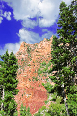 Wall Mural - Nevada Mountain Forest Landscape