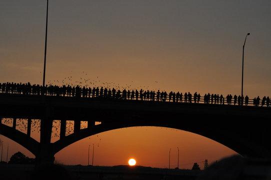 Lady Bird Lake, Austin, Texas, USA - 7/2011:  bats in flight at dusk
