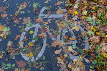 Wet bike path with autumn leaves