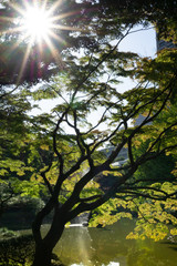 The sun shining through a green tree on a meadow, with a pond in the bottom