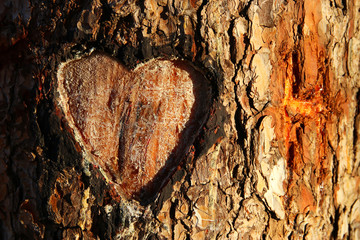 Photo of old tree trunk with heart carved on it. Valentine's day concept. Romantic background. Wall mural