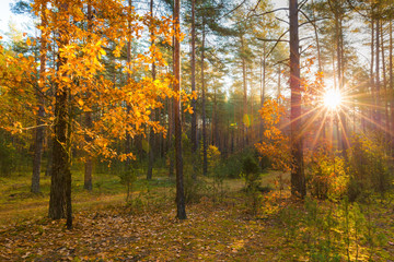 Papiers peints Forets Sun in forest