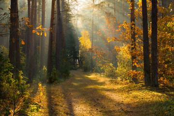 Fall wonderland
