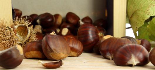 Sweet chestnuts raw