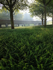 morning sun over the plants at the Kerklaan in Nieuwerkerk aan den IJssel