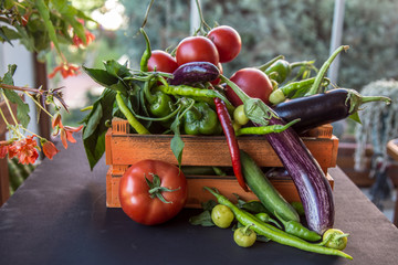 vegetables grown in the garden fresh and organic