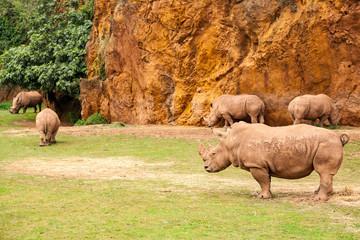 Rinoceronte africano - toma 2