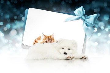 Fotomurales - merry christmas signboard or gift card for pet shop or vet clinic, white dog and ginger cat pets isolated on white card with blue ribbon bow on blurred blue xmas lights, copy space blank background