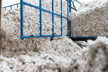 Greek seed cotton in a tractor trolley getting unloaded in the ginning mill