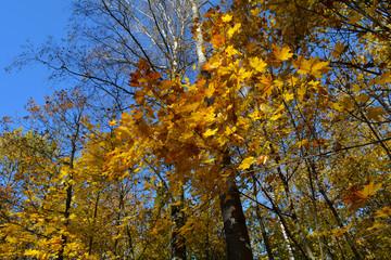 Осений лес