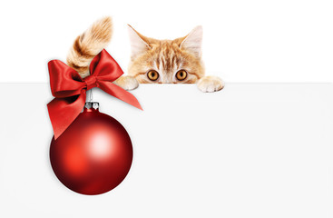Fotomurales - merry christmas signboard or gift card for pet shop or vet clinic, ginger cat showing white card with red xmas ball and ribbon bow, isolated on white, copy space blank background