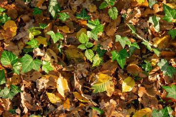 Herbstlicher Waldboden im morgendlichen Sonnenlicht. Standort: Deutschland