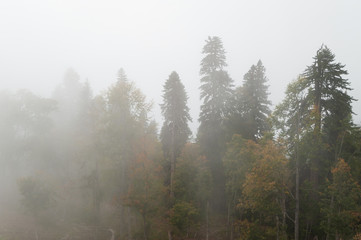 Landscape on a foggy forest, top view