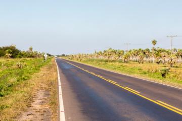 National Route 9 highway runs through a palm forest and grasses of Paraguayan Chaco savannah, Paraguay. Ruta Nacional Número 9 Dr. Carlos Antonio López. Ruta Transchaco. Yellow axial line
