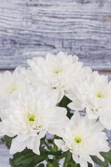 Fresh white chrysanthemums background. Beautiful white flowers on wooden background. Autumn flowers decor.