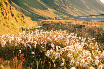 travel to iceland: landscape with road