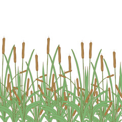 Cattail, bulrush. Texture, background, wallpaper, seamless. Template. Color.