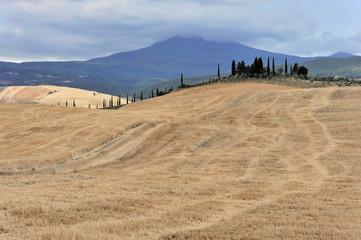 Abgeerntete Weizenfelder, Landschaft südlich von Pienza, Toskana, Italien, Europa, ÖffentlicherGrund, Europa