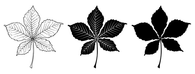 Chestnut leaf. Linear, silhouette isolated on white background. Vector illustration