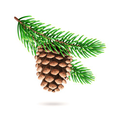 Realistic pine cone at fir tree branch or 3d strobilus at pine-tree twig. Spruce with evergreen seed part of plant. Decoration for new year and christmas, xmas festive and holidays. Celebration theme
