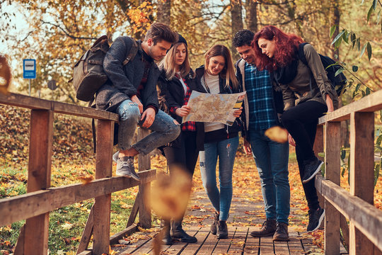 Group of young friends hiking in autumn colorful forest, looking at map and planning hike.