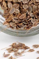 Dill Seeds Close-Up