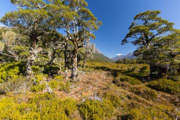 Valley near lake Howden Hut, Fjordland, New Zealand