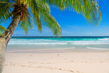 Wall Mural - Vacation sandy beach with palm and turquoise sea.  Summer vacation and tropical beach concept.