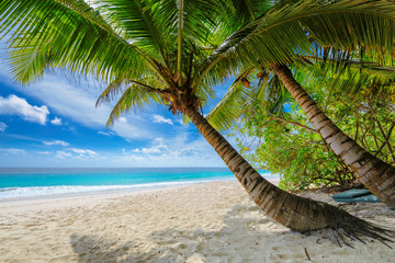 Wall Mural - Untouched sandy beach with palm and turquoise sea on Jamaica island. Summer vacation and travel concept.