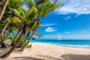 Fototapete - Exotic sunny beach with palm and a sailing boat in the turquoise sea on Hawaii paradise islands. Summer vacation and tropical beach concept.