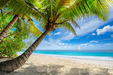 Exotic sandy beach with palm and a sailing boat in the turquoise sea on Jamaica paradise island. Summer vacation and travel concept.