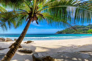 Tuinposter Centraal-Amerika Landen Tropical Beach. Sandy beach with palm and turquoise sea. Summer vacation and tropical beach concept.