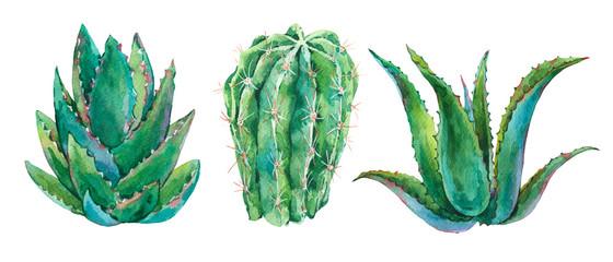 Exotic natural vintage watercolor cactus greeting card