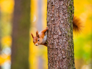 Squirrel, on tree