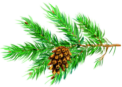 Watercolor painted fir tree branch with cone