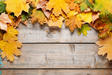 Autumn background. Maple varicolored autumn leaves on the wooden background with free space for text.