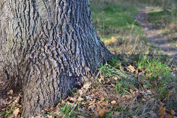 trunk of tree
