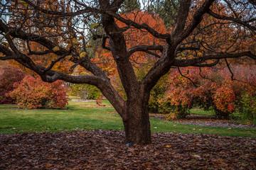 Autumn scene at Finch Arboretum, Spokane, Washington, USA